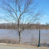 The Ohio River at 49' from Lesko Park