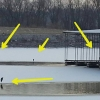 At one point this winter, we had 10 herons hanging out.